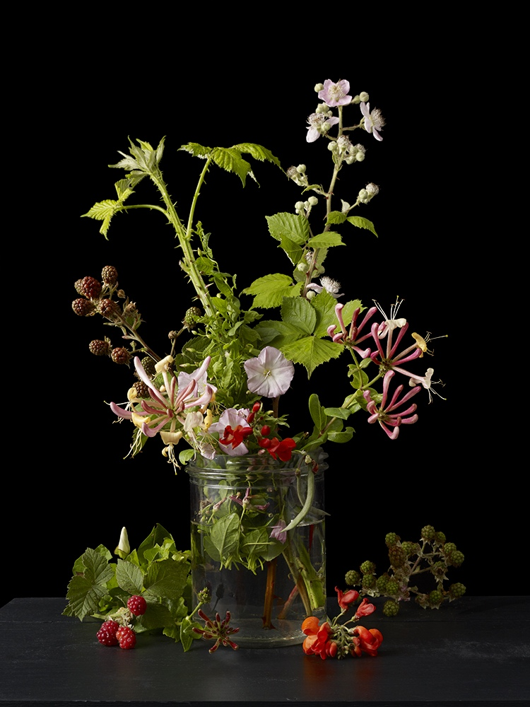 Allotment Plants 3
