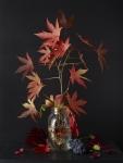 Autumn Plants 2