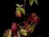 Autumn Plants 4