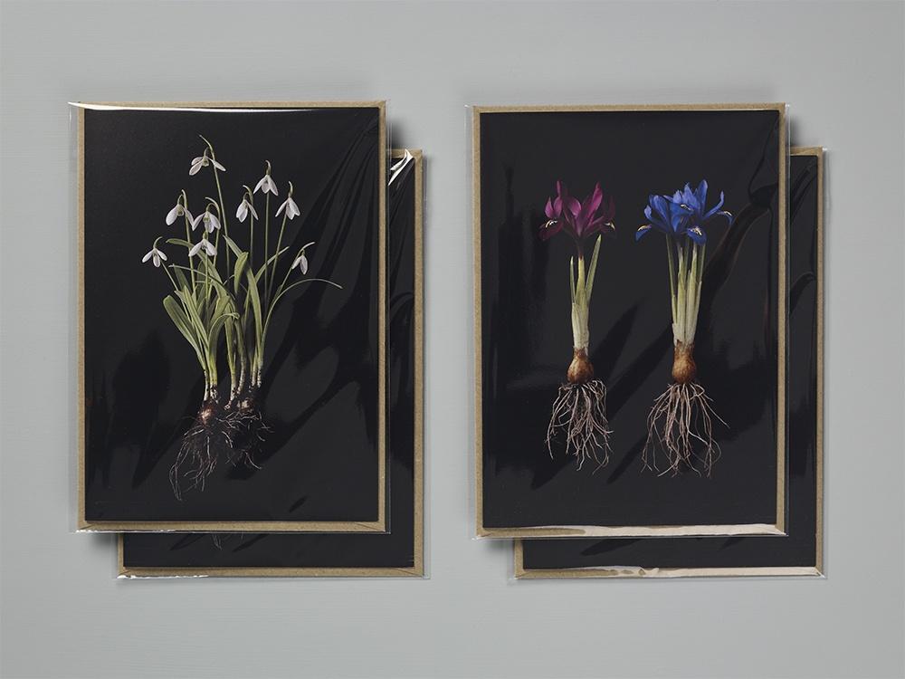 Cards - Galanthus 2 & Iris 4