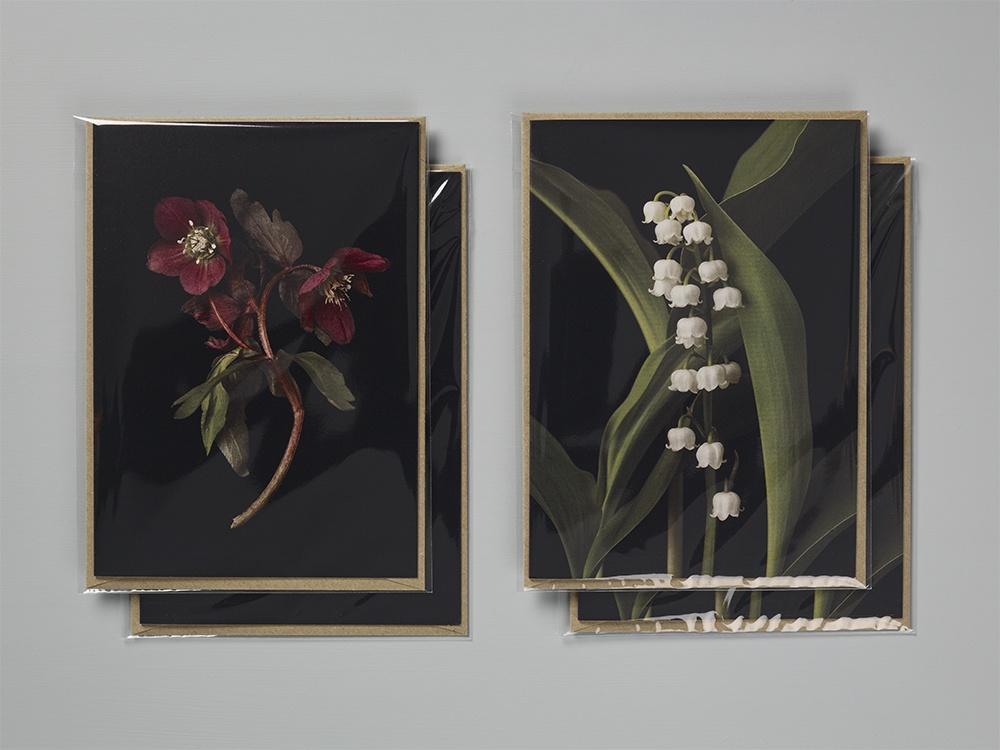Cards - Helleborus 2 & Convallaria 2
