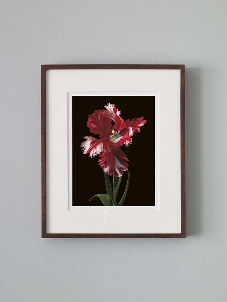 A4 Giclée Print in Mount and Frame