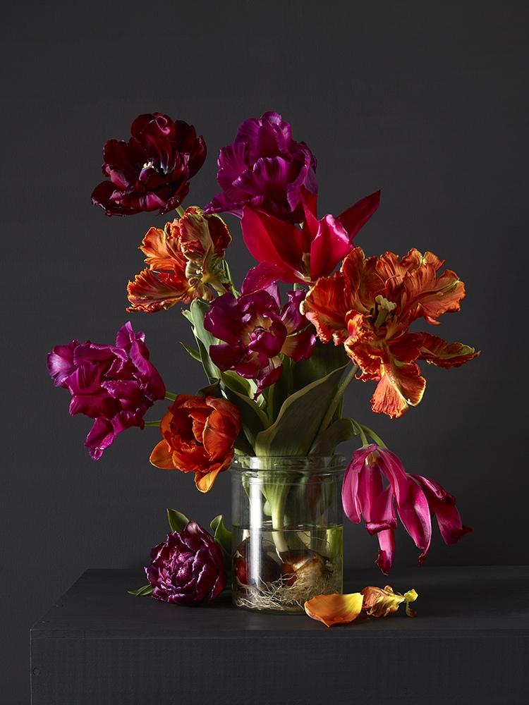 Mixed Tulips 4