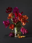 Mixed Tulips 4