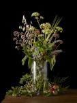 Allotment Plants 2