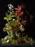 Allotment Plants 4
