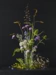 Mixed Summer Plants 1