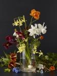 Spring Plants 1